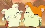 96aae03e6c94cc712ddec337bf77550f--hamtaro-anime-couples