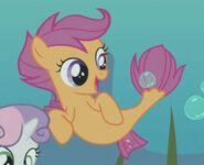 Scootaloo sea pony