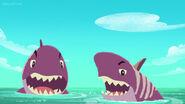 Never-Sharks-Shark Attack