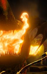 Ogień Płetwogrzbieta 02