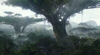 Дерево Дома.jpg