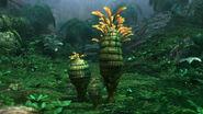 Pineapple Plant