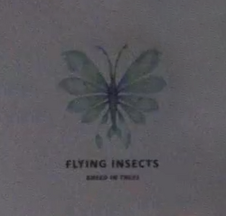 Flying Insect.png