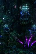 Thistle Bud bioluminescence night