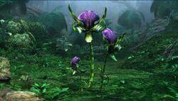 Mantis Orchid.jpg