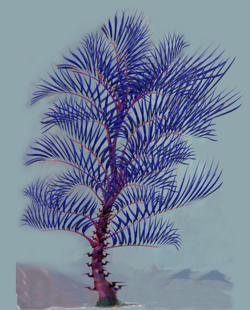 Razor Palm.png