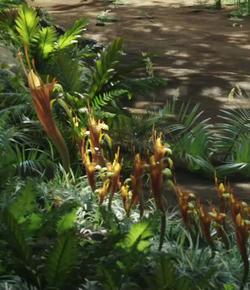 Direhorse Pitcher Plant.png