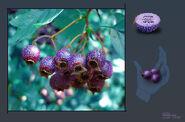 Yovo Fruit Concept