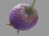 Yovo Fruit