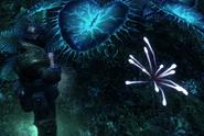 Anemonid Bioluminescence
