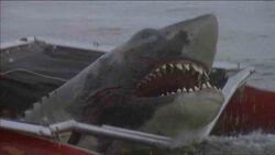 Jaws2 01.jpg