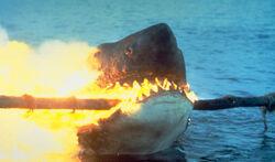 Jaws-2.jpeg