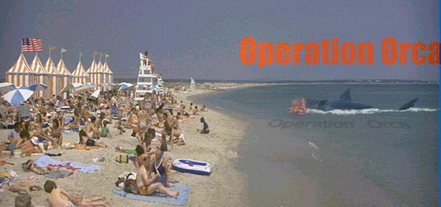 Kintner beach OO banner.jpg