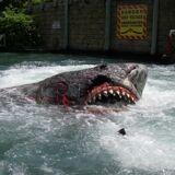 USF shark.jpg