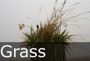 Grass caption