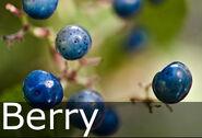 Berry caption
