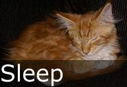 Sleep caption