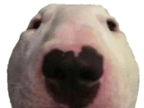 Walter (Dogelore)