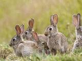 Rabbits (The Amazing Truth)