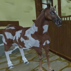 American Paint Horse/Other Appearances