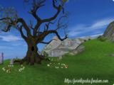 Pradawne drzewa