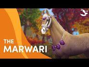 Meet The Marwari! 😍🐎