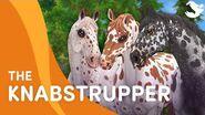 Meet the Knabstrupper! 😍❤️🐴