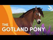 Meet the Gotland Pony! 😍🐴❤️ - Star Stable Breeds
