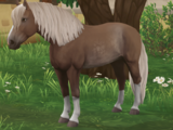 Koń fiński