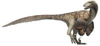 Fred Wierum Deinonychus