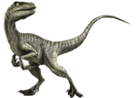 Velociraptor-info-graphicjpfanonwiki