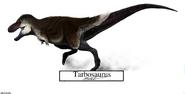 Tarbosaurus Rex