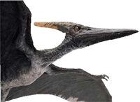 Jurassic Park III Alpha Male Pteranodon-1-