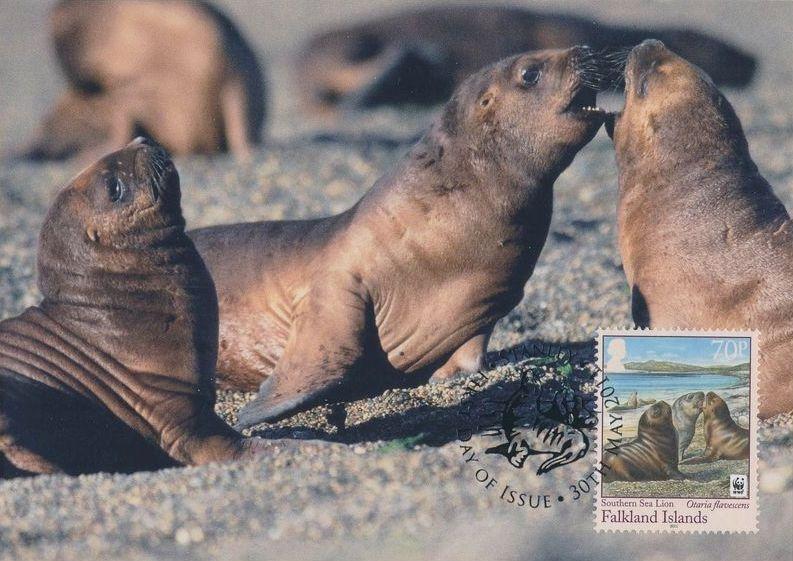 Falkland Islands 2011 WWF - The Southern Sealion MCc.jpg