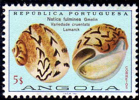 Angola 1974 Sea Shells k.jpg