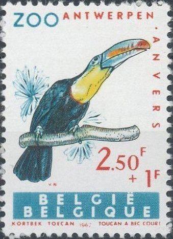 Belgium 1962 Birds of Antwerp Zoo d.jpg