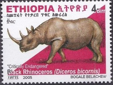 Ethiopia 2005 Black Rhinoceros j.jpg