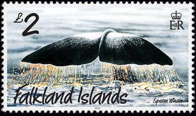 Falkland Islands 2012 Whales & Dolphins j.jpg