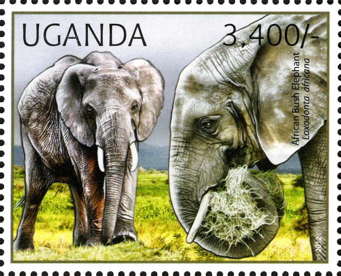 Uganda 2012 Fauna of African Great Lakes Region - African Elephant - African Bush Elephant