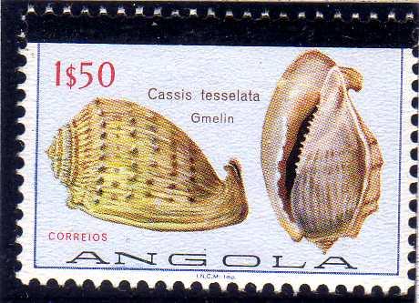 Angola 1981 Sea Shells Overprinted b.jpg