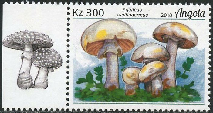 Angola 2018 Wildlife of Angola - Mushrooms