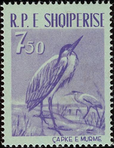 Albania 1961 Albanian Birds b.jpg