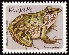 Venda 1982 Frogs