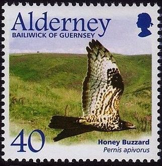 Alderney 2002 Migrating Birds Part 1 Raptors d.jpg