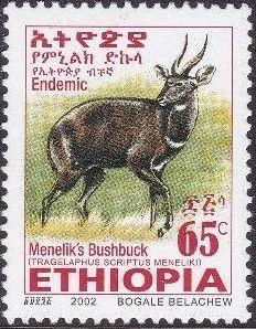 Ethiopia 2002 Menelik's Bushbuck m.jpg