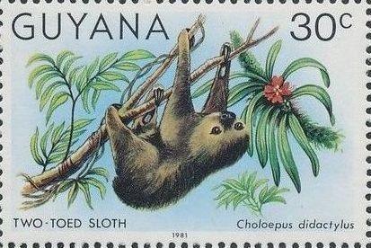 Guyana 1981 Wildlife d.jpg