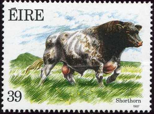 Ireland 1987 Irish Cattle d.jpg