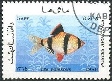 Afghanistan 1986 Fishes a.jpg
