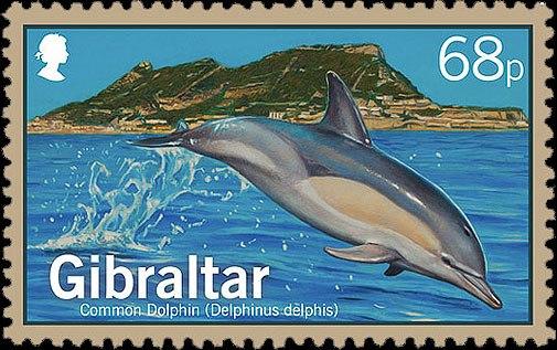 Gibraltar 2014 Dolphins a.jpg
