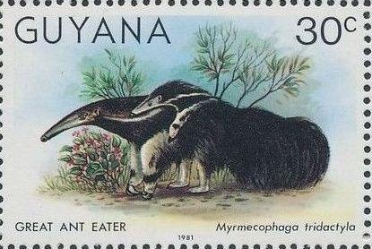 Guyana 1981 Wildlife i.jpg
